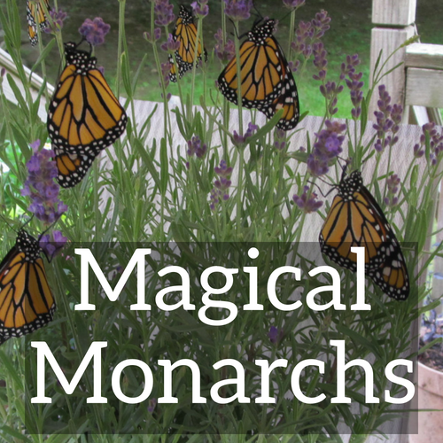 Magical Monarchs
