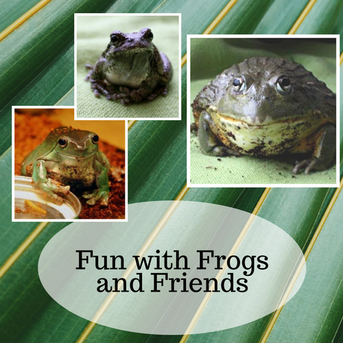 Fun with Frogs and Friends - With Roaring Brook Nature Center