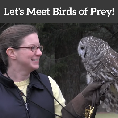 Let's Meet Birds of Prey!