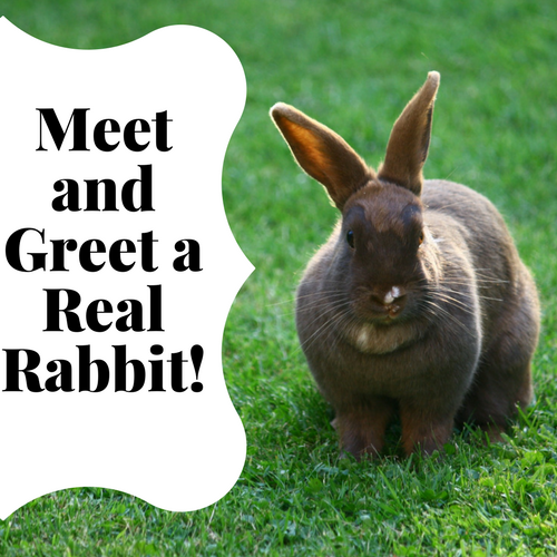 Meet and Greet a Real Rabbit!